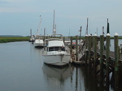 Dolphin Tours & Boat Charters on Tybee Island SC